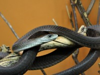 The Most Venomous Snakes on Earth