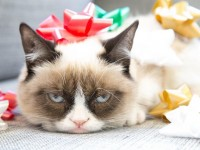 Why Has Grumpy Cat Become so Popular?