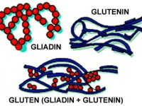 What is Gluten? Is it Good for Your Health?