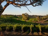 3 Of The Best Australian Wine Valleys