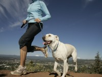 Mutt Moves: Dog Exercise for Busy Lifestyles