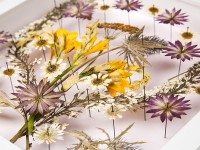 The Unexpected Beauty of Pressed Flowers