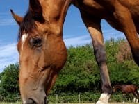 The Importance of Nutrition for Your Horse