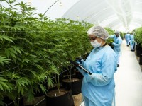 Silverpeak Life Sciences bringing a revolution in the marijuana industry