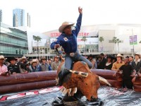 5 Things to Know When Hiring a Bucking Bull for an Event