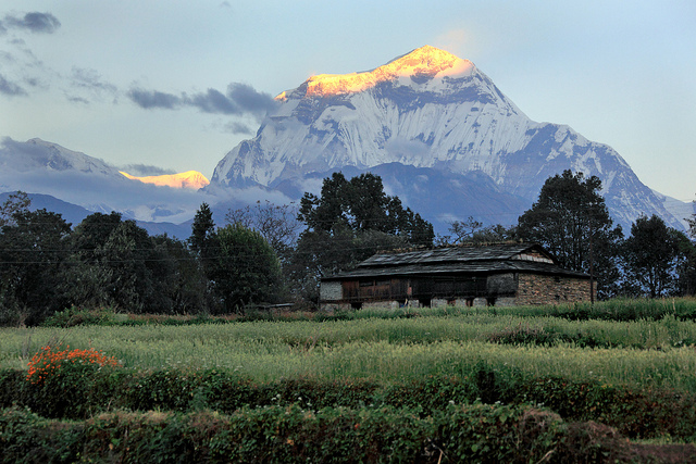 Sunrise-on-Dhaulagiri-from-Swanta