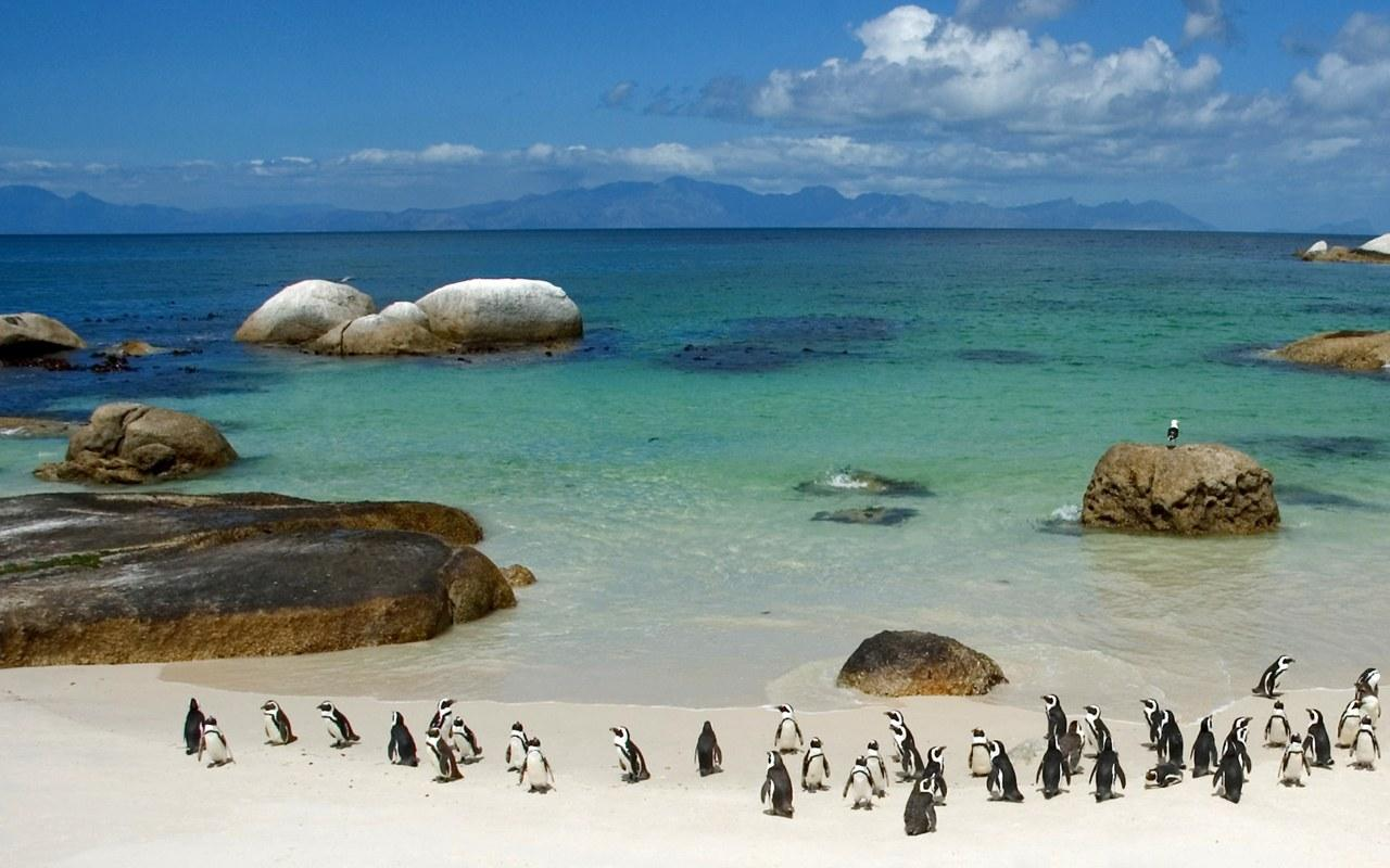 South Africa1