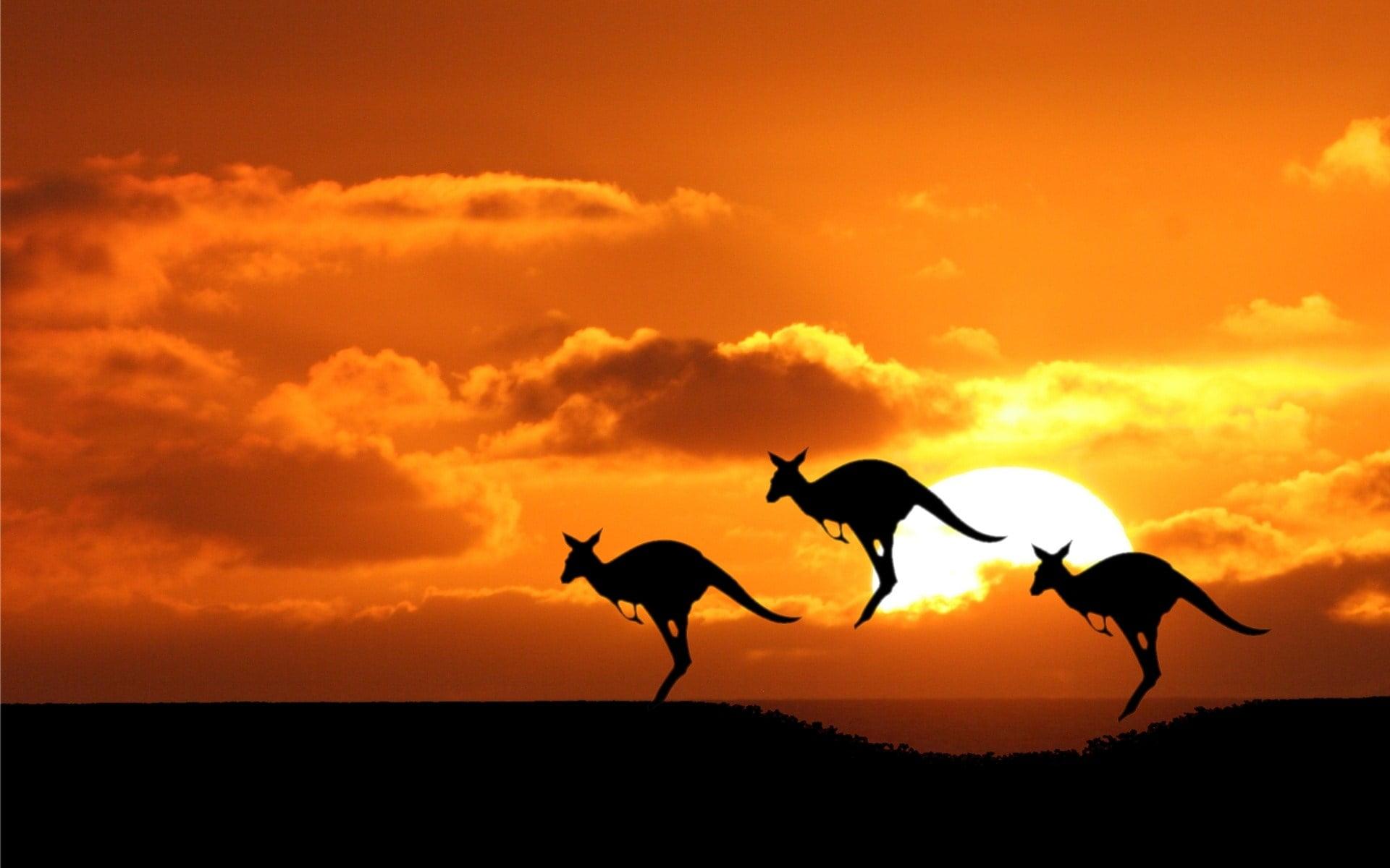 przesunięcie Australii