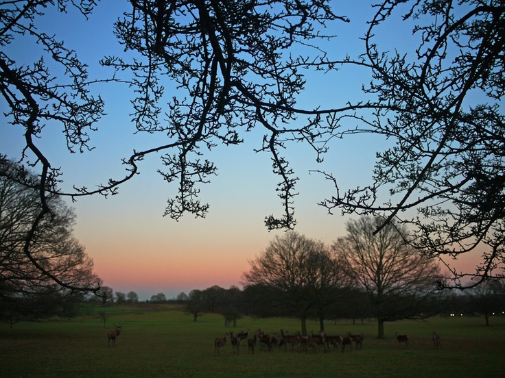 Richmond Park siunset