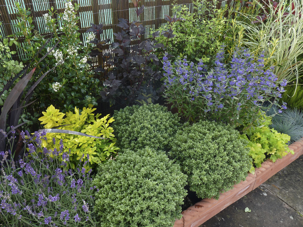 How to design an easy to manage garden for Easy maintenance plants
