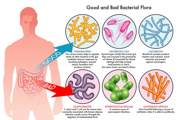 Probiotics: Keep Your Bacteria Happy and They Will Keep You Healthy